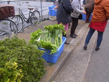 Celery05