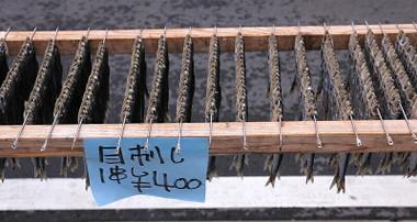 1603katsuurakatsuo05