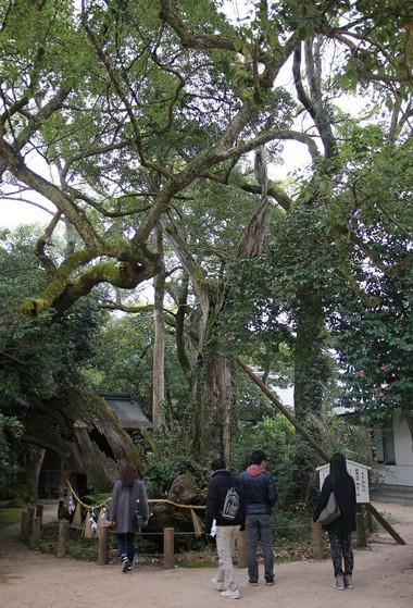 Ooyamadumi02