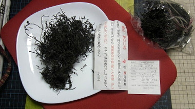 Shimahijiki02