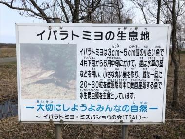 Jimotomizubasyou03