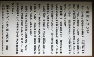 Kashimajingu06b