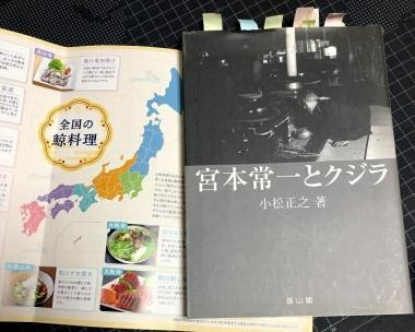 Minamibousoukujira05